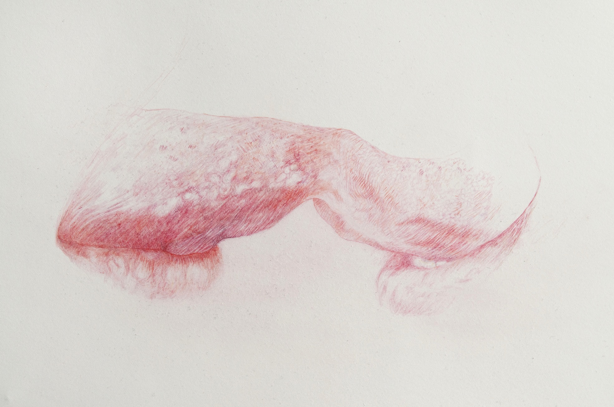 Lick, coloured pencil on paper, 56 x 61 cm, 2012 (detail)