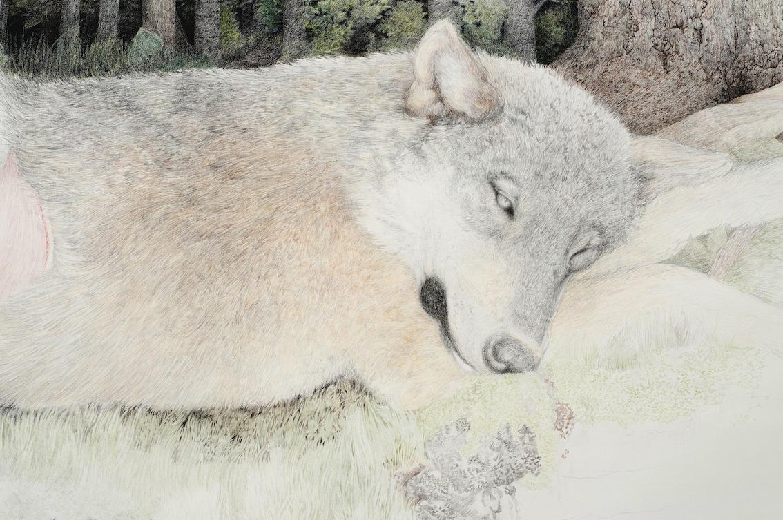 Ulven, coloured pencils on paper, 320 x 141 cm, 2012